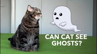 Кот видит призраков в новой квартире?; Does cat see ghosts in a new apartment?