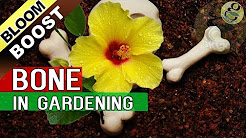 5 TIPS TO INCREASE FLOWERING in Plants – Bloom Booster Hacks | Bone meal Fertilizer