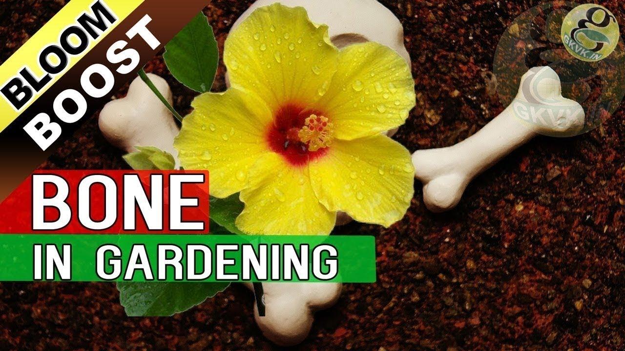 5 Tips To Increase Flowering In Plants Bloom Booster Hacks Bone