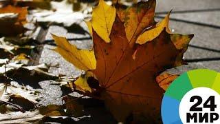 Смотреть видео Назван день, когда в Москве начнется настоящая осень - МИР 24 онлайн
