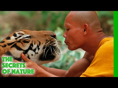 The Tiger and the Monk - The Secrets of Nature