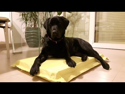 the-indestructible-dog-bed--the-last-that-you-will-buy