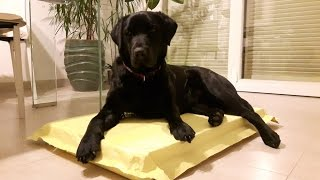 The Indestructible Dog Bed- The Last That You Will Buy