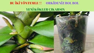 Orkide Köklerini Coşturan İki Yöntem /Orkide Çiçek Açtırma /Orkide bakımı /Orkide coşturan / Orchids