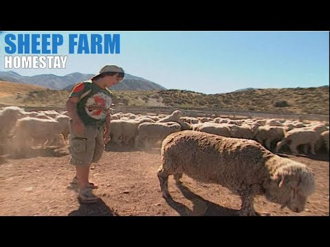 New Zealand - A sheep station home-stay in the Southern Alps
