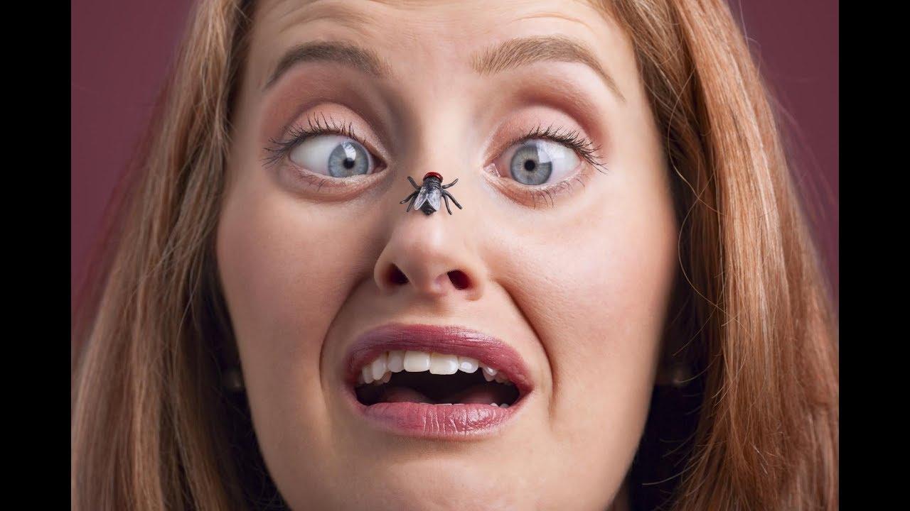 Картинка у ребенка муха на носу