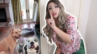 500-realistic-silicone-mask-prank-on-my-pets-hilarious-reactions