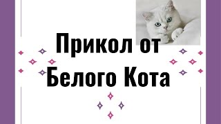★ Кошки видео прикол! Смеяться до слез! #Обхохочешься.