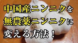 中国産ニンニクを 無農薬ニンニクに 変える方法! thumbnail