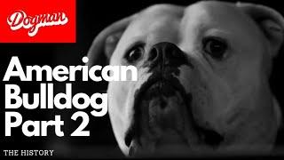 American Bulldog part 2 | The History
