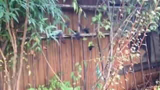 黒い蝶々いっぱい