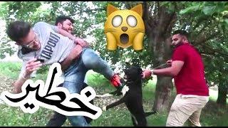 مقلب الكلب المسعور بعمر زكي وصار الي صار!!