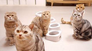 -심쿵주의- 평소 고양이들 귀여운 밥 먹기