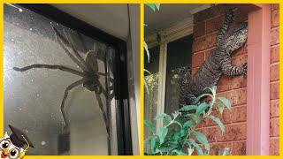 10 Przerażających Zwierząt Znalezionych W Domach