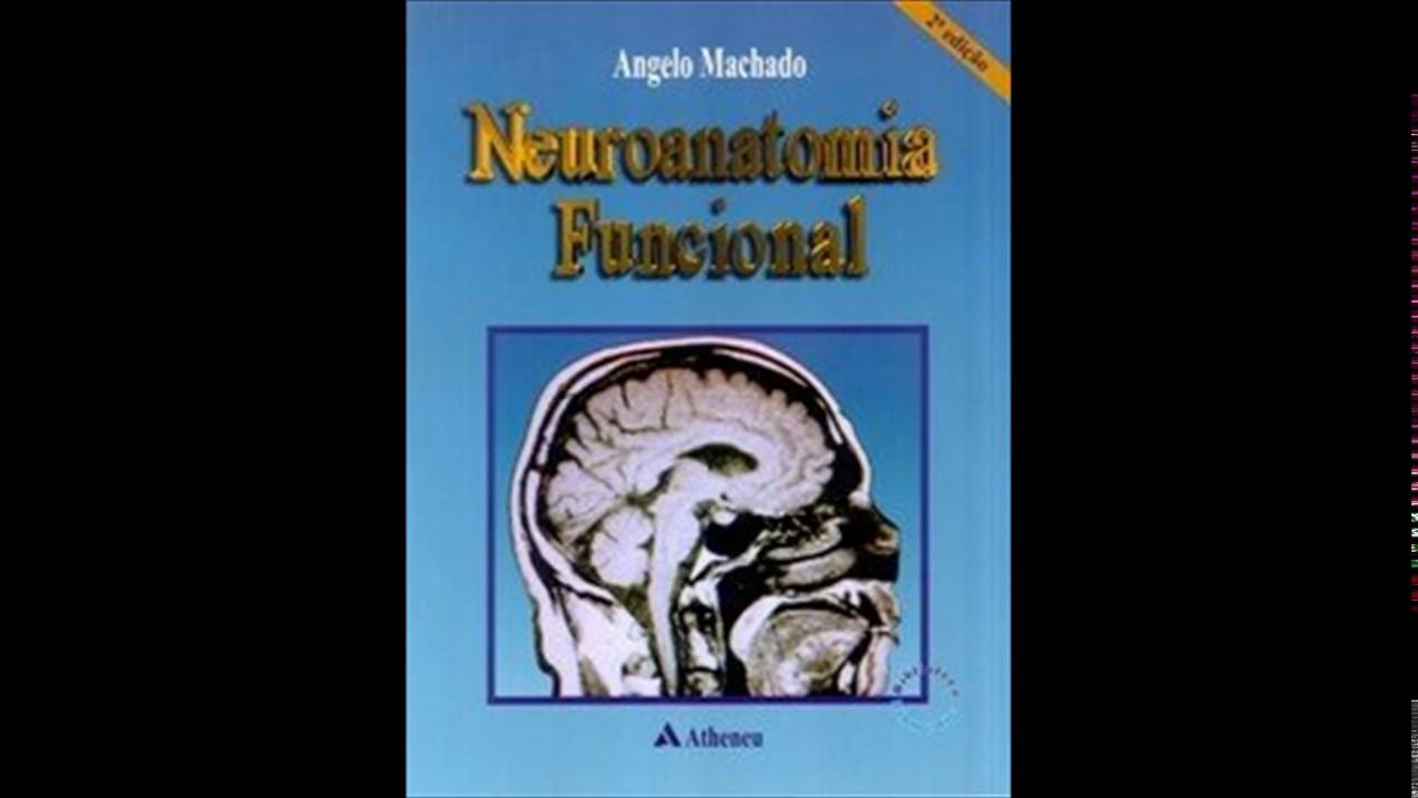 gratis neuroanatomia funcional angelo machado
