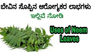 Bevina Soppu Uses in Kannada | Neem Leaves Benefits in Kannada | Uses of Neem Leaves in Kannada |