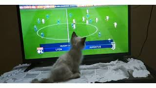 شاهد رد فعل القطه عند مشاهده كرستيانو / كوره اونلاين