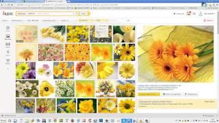 Урок №1 Как искать картинки