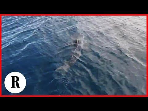 Croazia Nel Video Amatoriale Un Grande Squalo Mako L