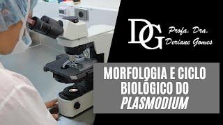elhalad a Plasmodium malária életciklusa)