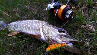 Нарвался на КЛЕВ ЩУКИ Отличная спиннинговая рыбалка