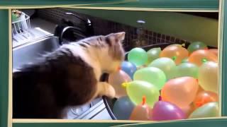 Кошки лопают шарики. Видео смешное