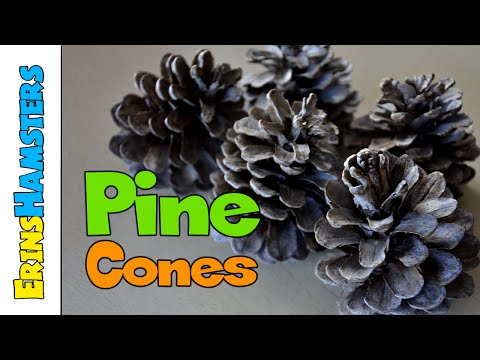 SANITISING PINE CONES FOR RABBITS & GUINEA PIGS