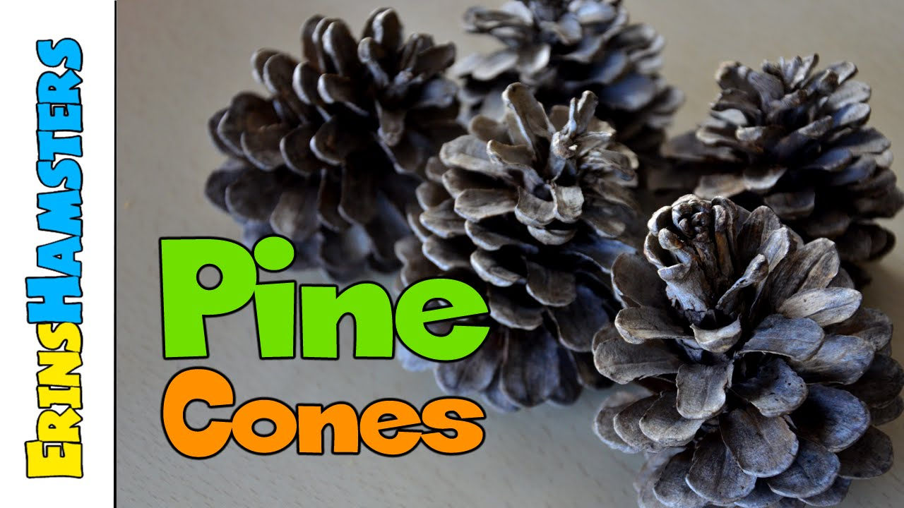 Making Pinecones Safe For Pets