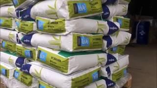Семена кукурузы 2018