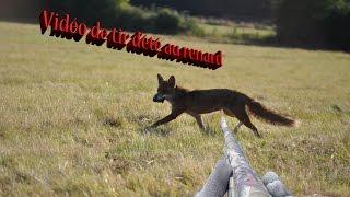 Chasse au renard GoPro Hero4