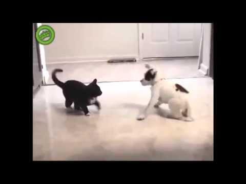 FUNNY VIDEOS: Funny Cats - Funny Cat Videos - Funny Animals - Funny Dogs - Funny Pranks - 2