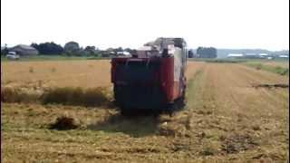 麦刈り風景.