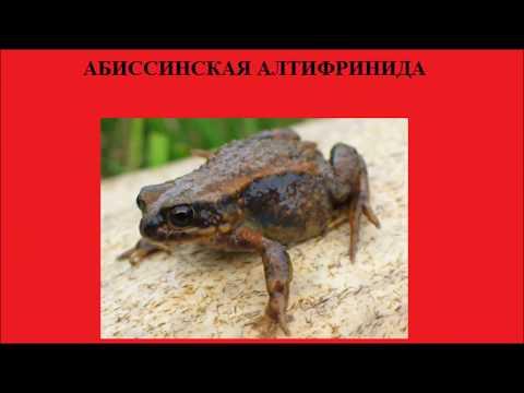 Международная Красная книга. Редчайшие животные. Часть 1