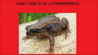 Мировая красная книга. Редчайшие животные (часть 1)