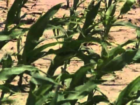 UNL (University of Lincoln Nebraska) - Farming Technology
