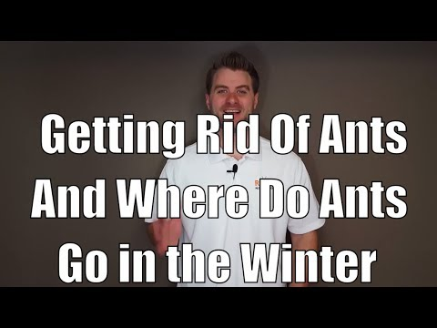 Pest control tips for getting rid of ants and where do ants go in the winter