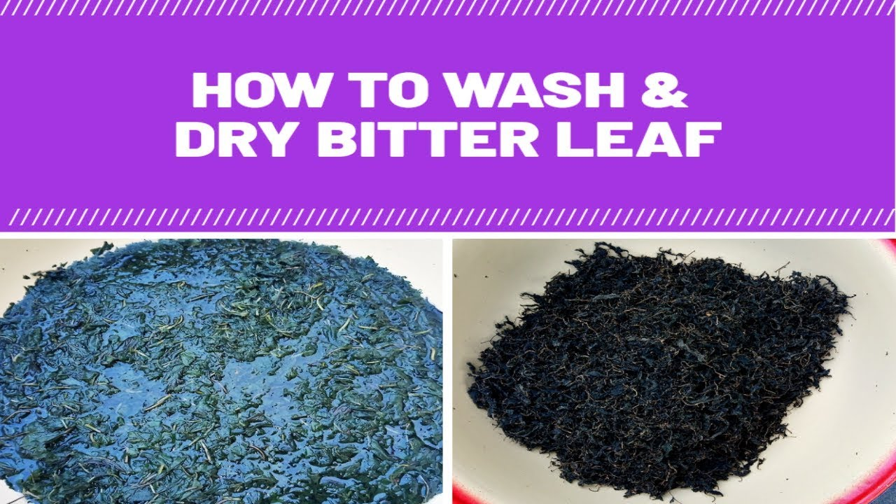 How To Wash Bitter leaf And Sun Dried Bitter leaf (Easy Way)
