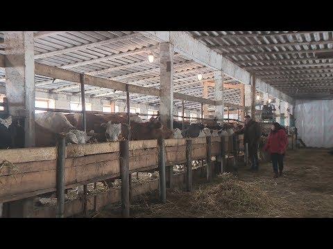 Камышинские фермеры возрождают животноводческое хозяйство