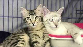 Very Cute Kittens and Cats - All Rescues- Cat Adoption Fair