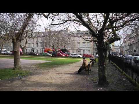 Queen Square trees under threat