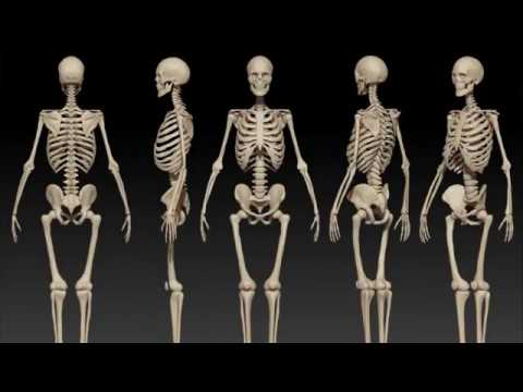 Skeleton Meditation: Spiritual Technology