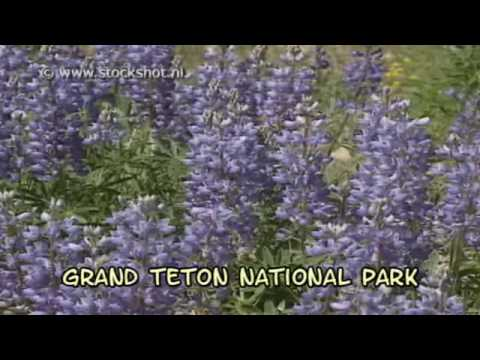 Grand Teton National Park - Great Yellowstone