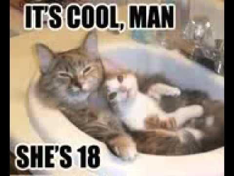 Подборка смешных фото котов и кошек!