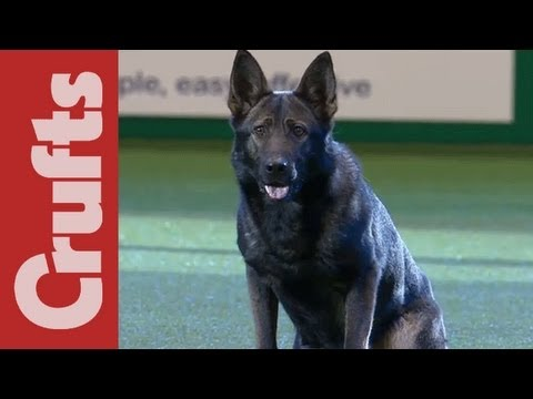 West Midlands & South Wales Police Display - Crufts 2012