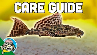 Pleco Fish Care - Plecostomus - Aquarium Co-Op