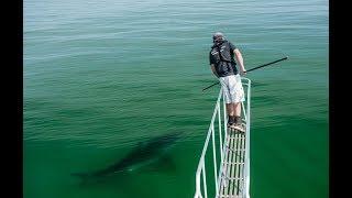 Tracking Cape Cod White Sharks with Greg Skomal