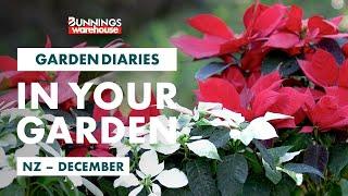 Gardening in December | New Zealand | Bunnings Garden Diary