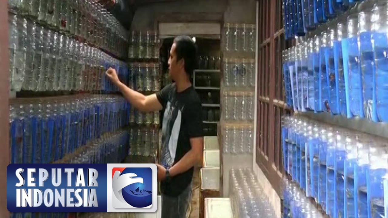 Budidaya Ikan Cupang Sindo 6 Maret 2016 - YouTube