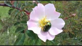 Затерянный рай/Полевые цветы/Природа