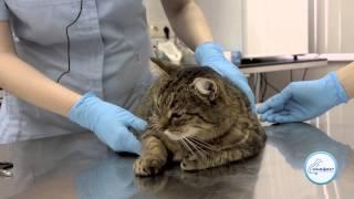 Как подстричь когти коту / кошке(, 2014-03-17T08:39:05.000Z)